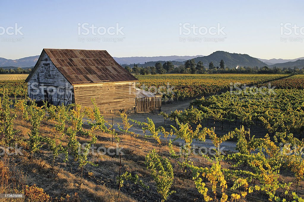 Vineyard Farmhouse stock photo