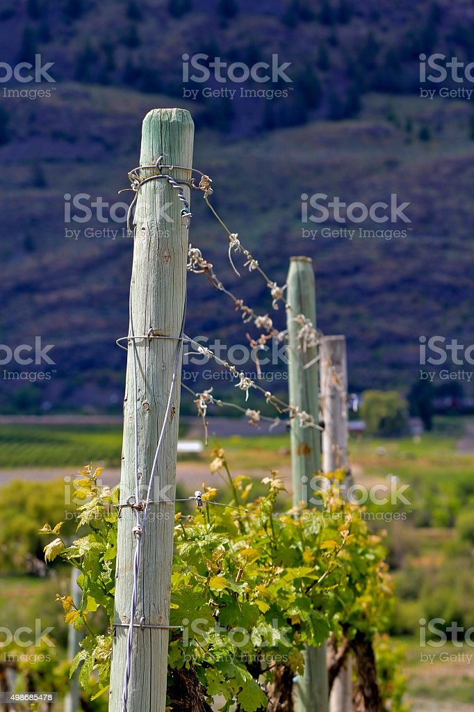 Vineyard Fence royalty-free stock photo