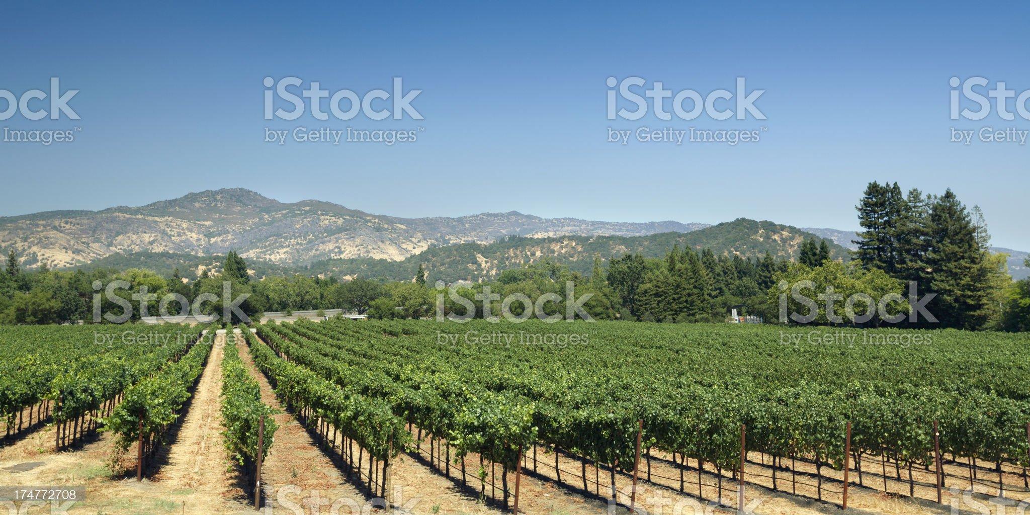 Vineyard fields royalty-free stock photo