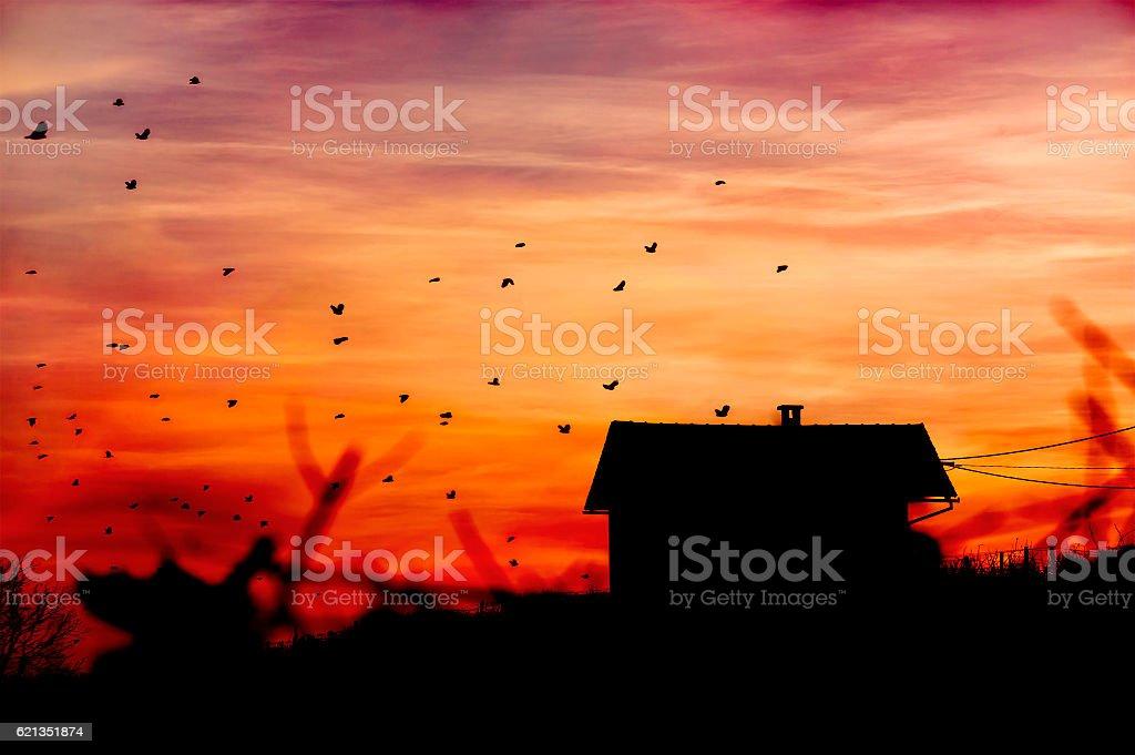 Vineyard house with birds stock photo