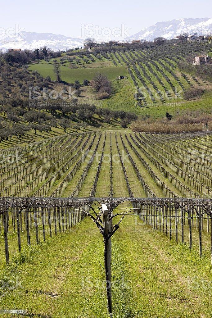 Vineyard in Abruzzi, Italy royalty-free stock photo