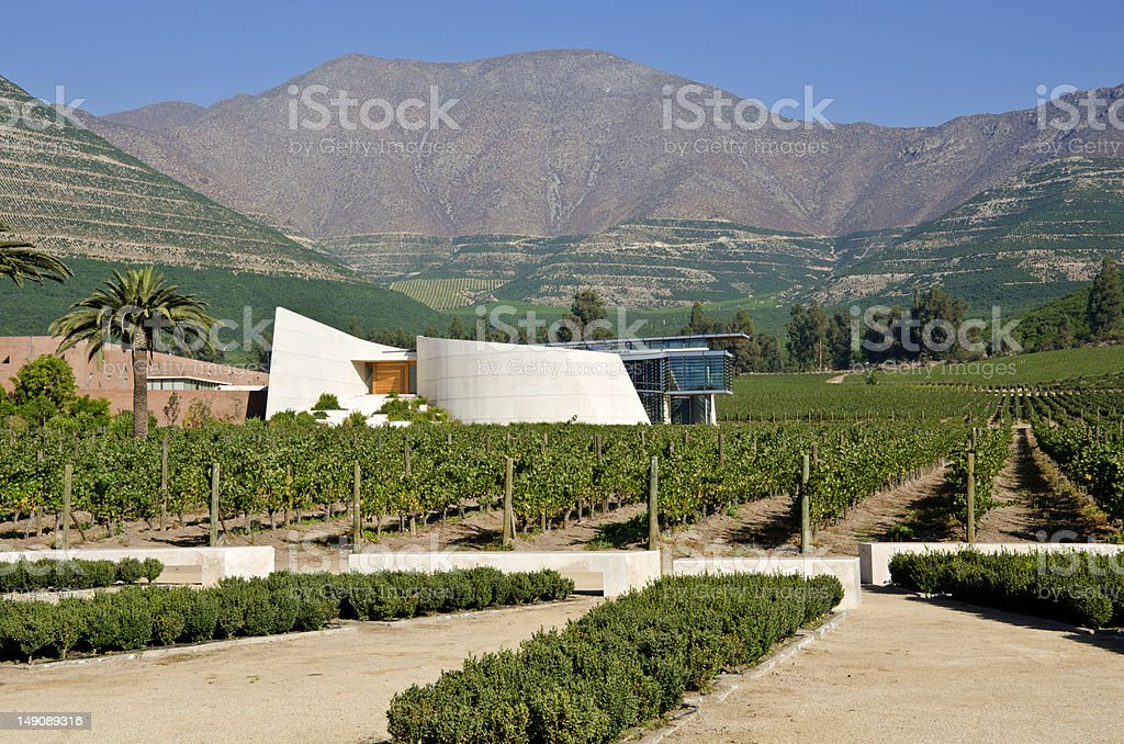 Vineyard in Aconcagua Valley Chile stock photo
