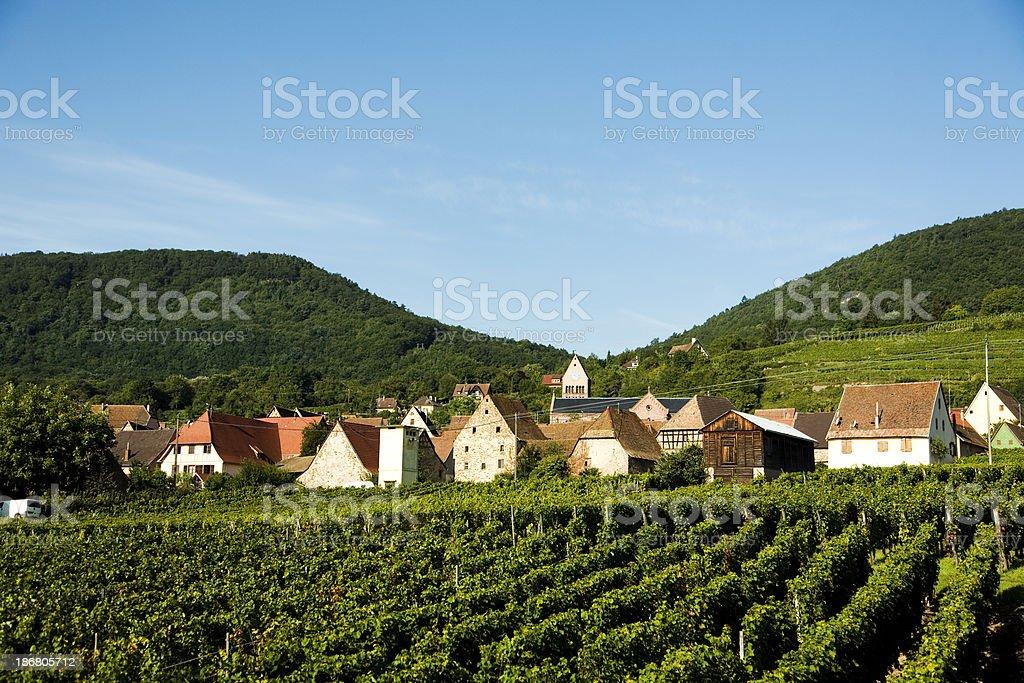 Vineyard in Alsace stock photo