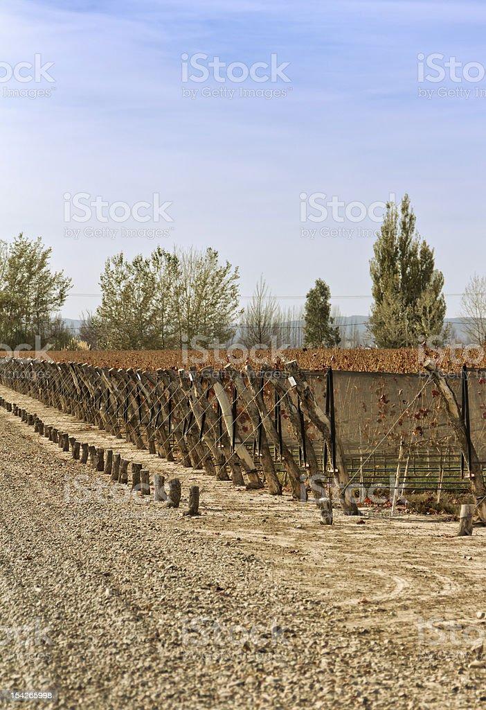 Vineyard in autumn royalty-free stock photo