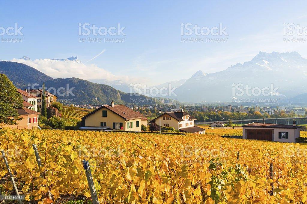 Vineyard in autumn under Alps stock photo