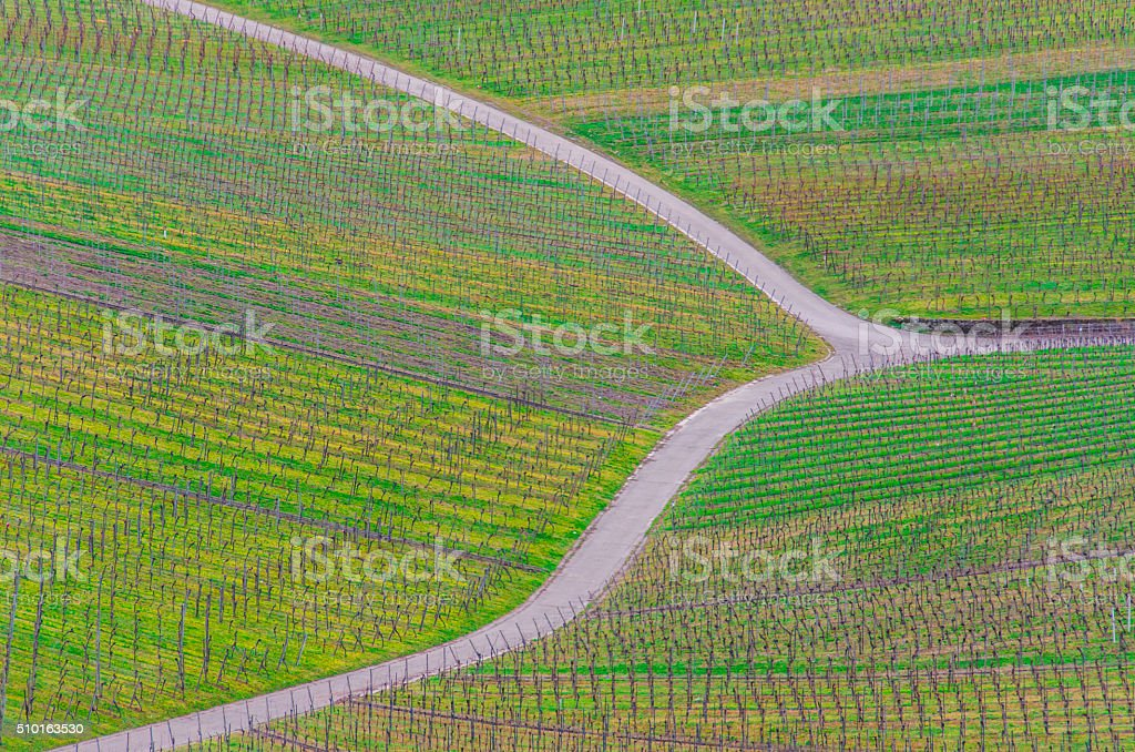 Vineyard in beautiful colors and tracks stock photo