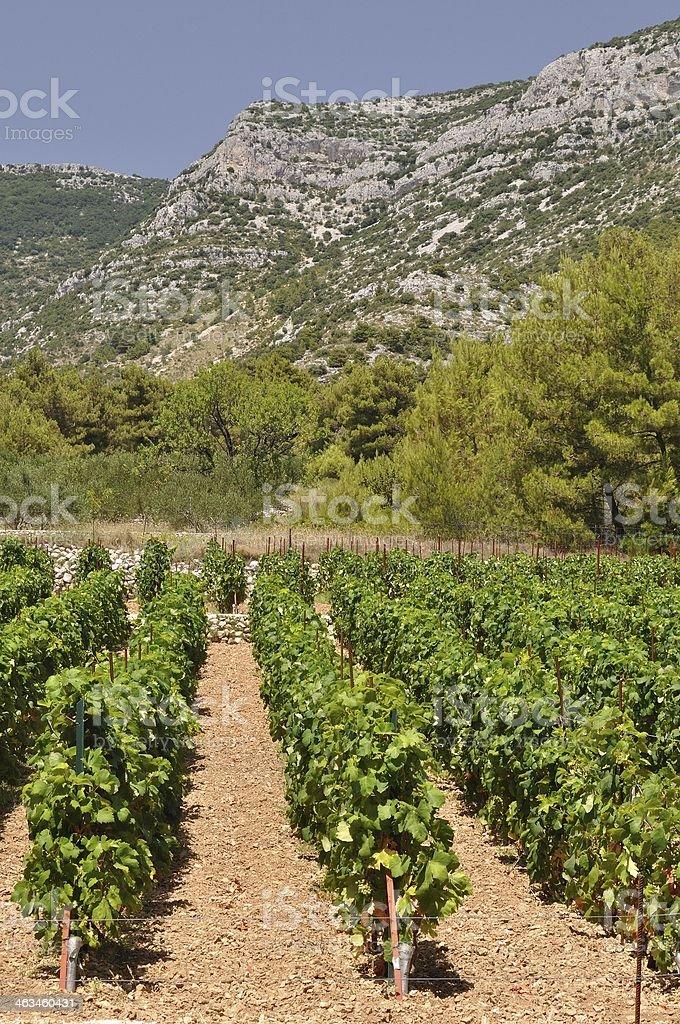 Winnica w list przewozowy miasto na Wyspie Brac.  Chorwacja zbiór zdjęć royalty-free