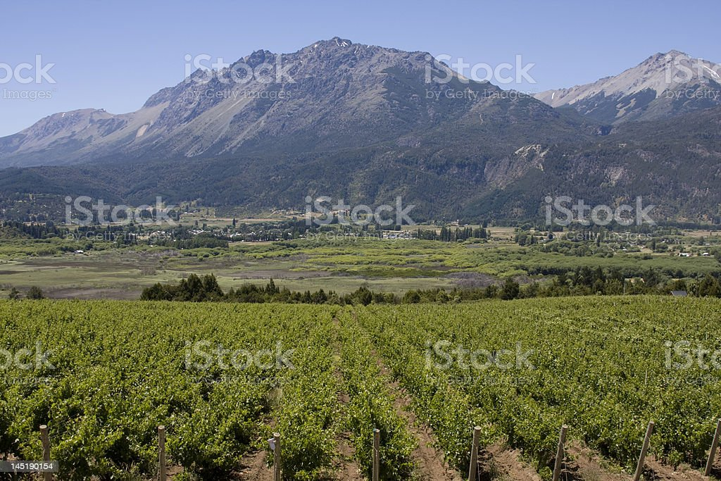 Vineyard in Bolson, Argentina royalty-free stock photo