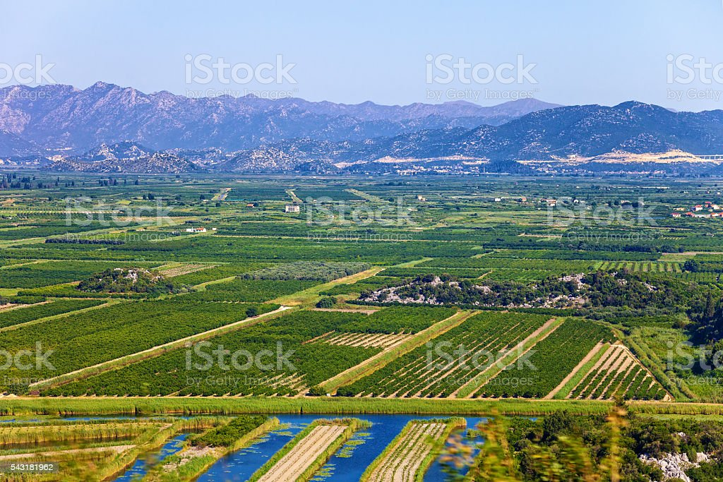 Vineyard in Croatia stock photo
