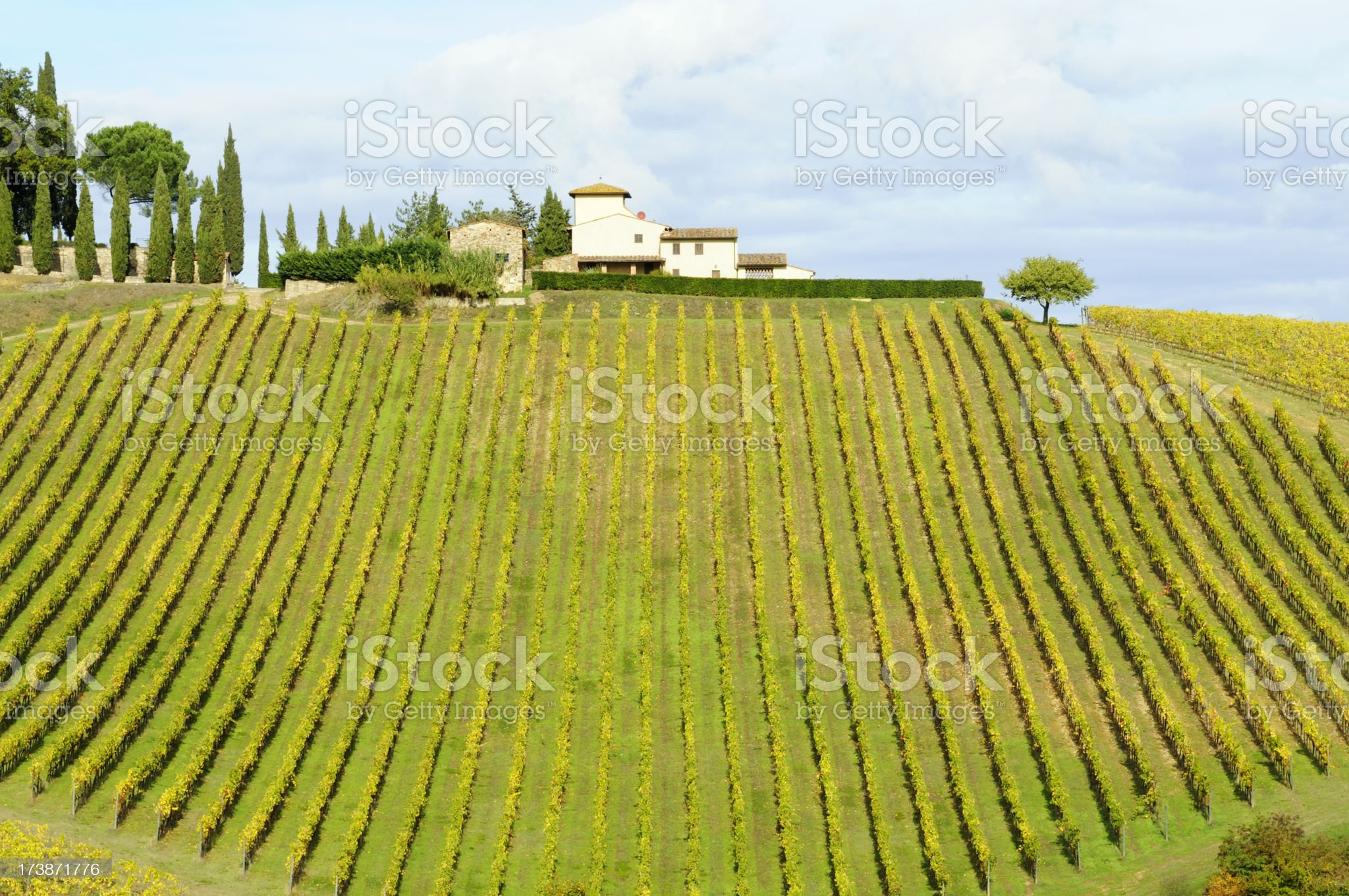 Vineyard in Fall and Tuscan Farmhouse royalty-free stock photo