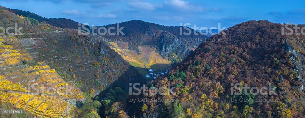 Vineyard in fall coloring stock photo