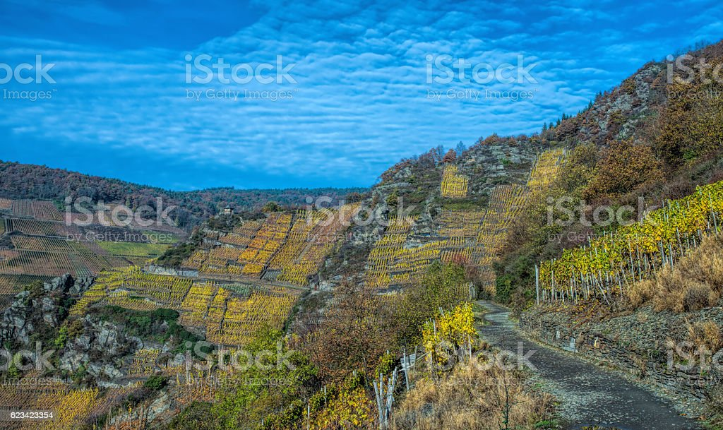 Vineyard in Germany stock photo