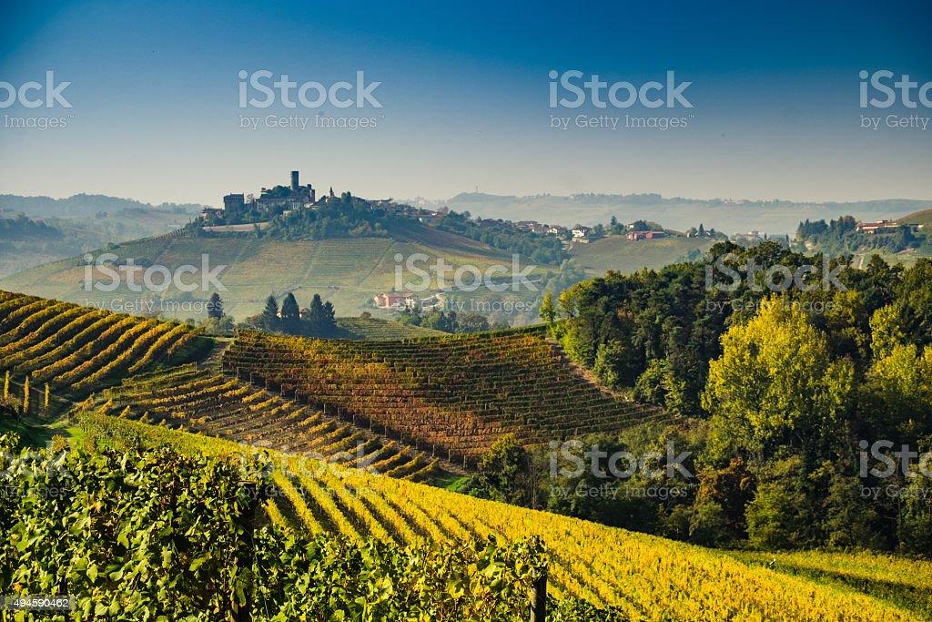 Vineyard in Langhe hills during autumn stock photo