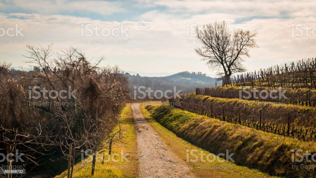 Vineyard in late winter stock photo