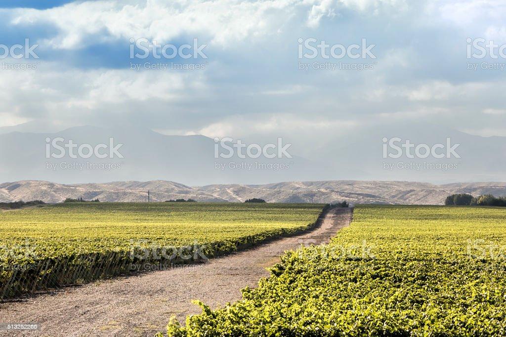 Vineyard in Mendoza stock photo