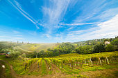 Vineyard in Montalcino