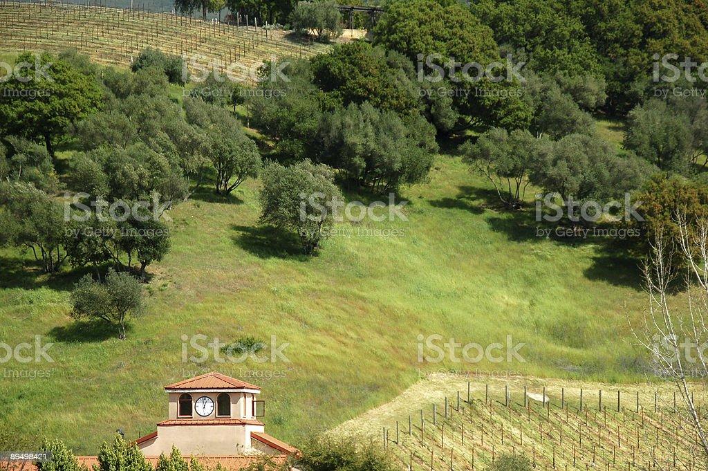 Vineyard in Napa royalty-free stock photo