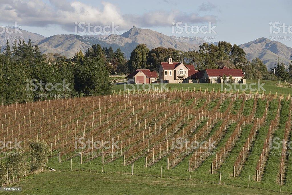 Vineyard in New Zealand stock photo