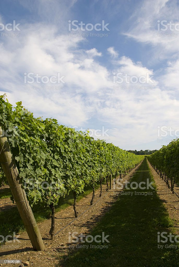 Vineyard in Newport, RI royalty-free stock photo