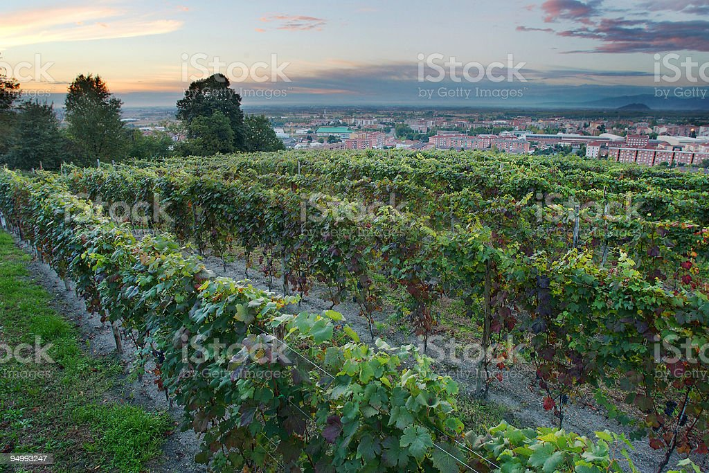 Vineyard in Pinerolo, Turin, beautiful sky at sunset on background royalty-free stock photo