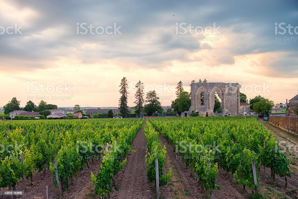 Vineyard in Saint Emilion stock photo