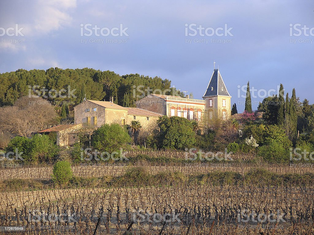 Vineyard in Southern France royalty-free stock photo