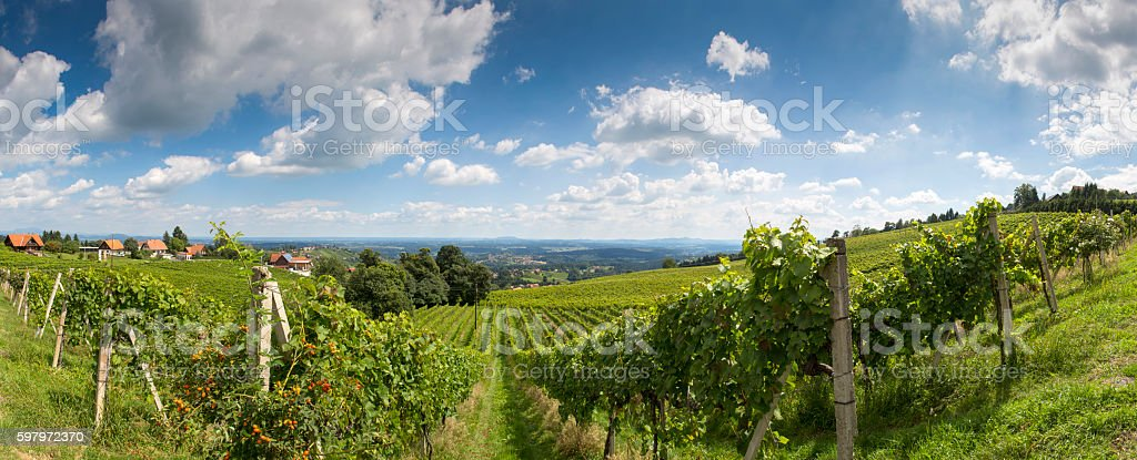 vineyard in styria,district deutschlandsberg stock photo