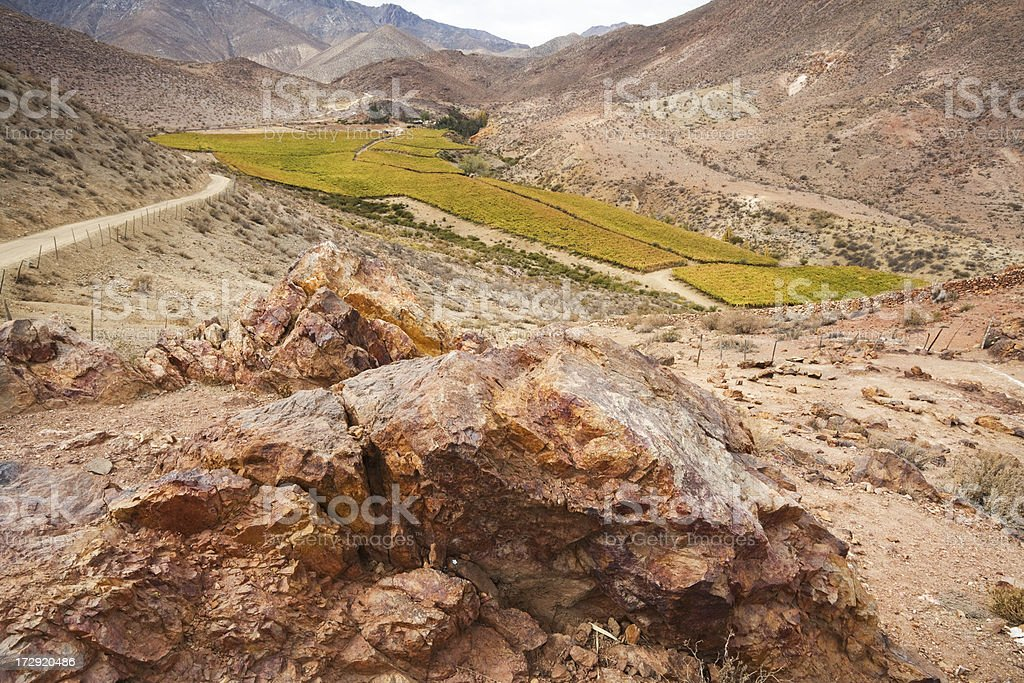 Vineyard in the Andes stock photo