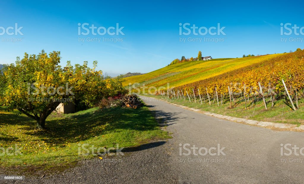 Vineyard in the autumn season in Wurttemberg Germany stock photo