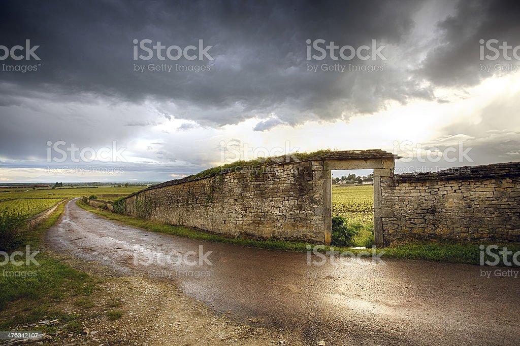 vineyard in the Burgundy Region, France. royalty-free stock photo