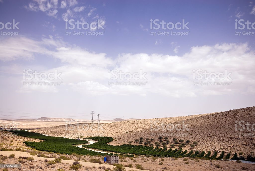 Vineyard in the Desert stock photo