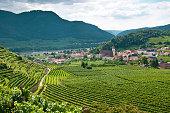 Vineyard in the famous Austrian winegrowing area Wachau (Spitz), Austria