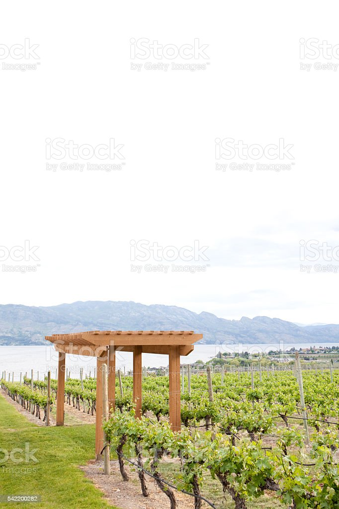 Vineyard in the Thompson Okanagan stock photo