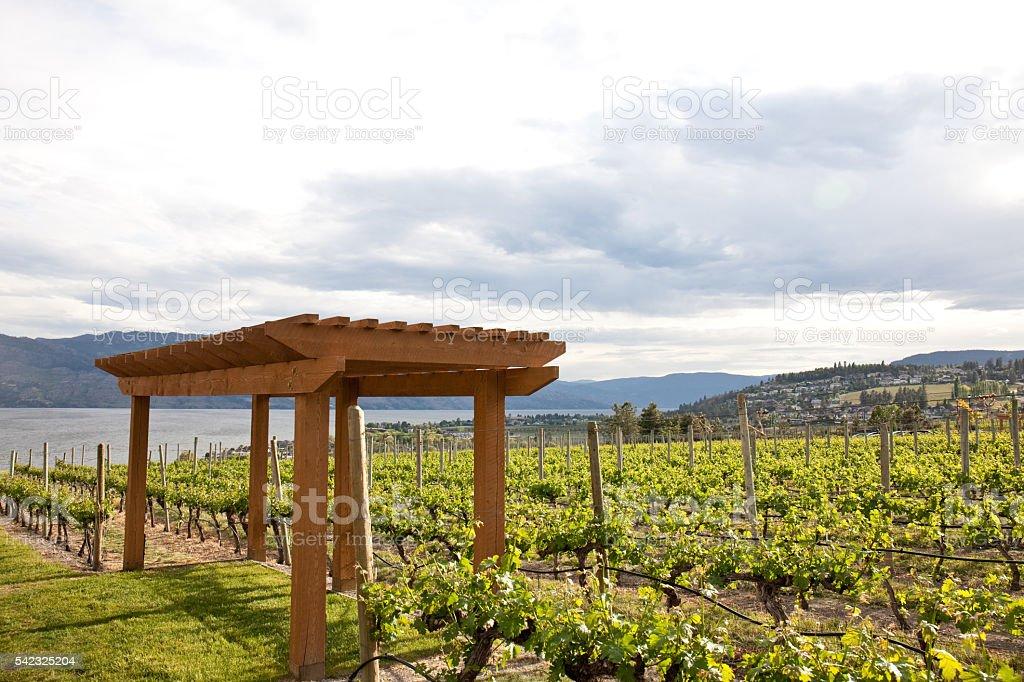 Vineyard in the Thompson Okanagan stock photo