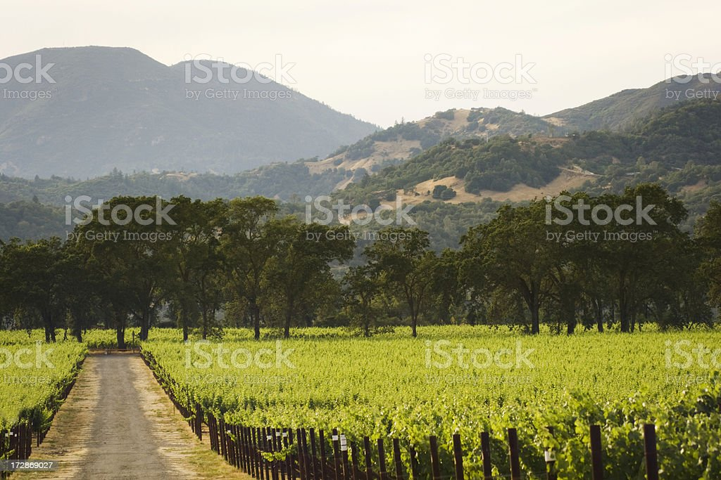 Vineyard in the Valley royalty-free stock photo