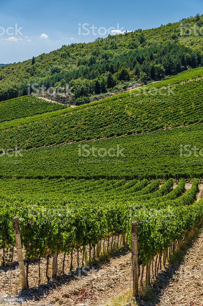 Vineyard in Tuscany, Italy stock photo