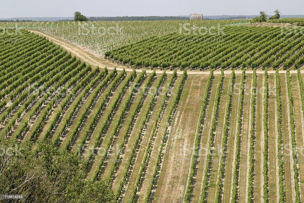 Vineyard in Val de Loire stock photo
