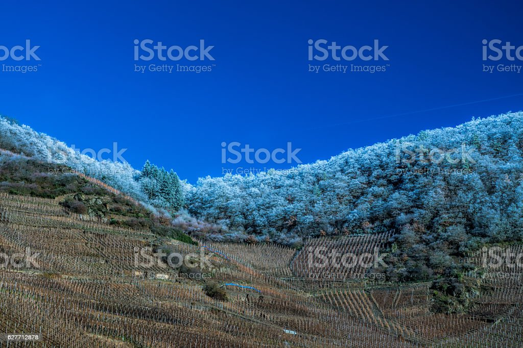Vineyard in winter stock photo