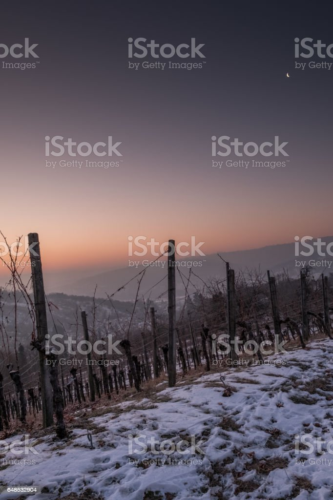 Vineyard in winter wiht snow and moon in the sky stock photo