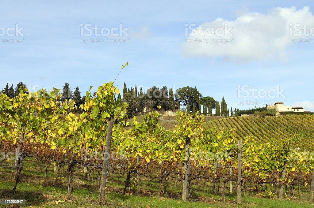 Vineyard Landscape and Farmhouse royalty-free stock photo