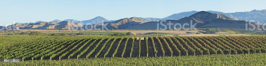 Vineyard Landscape - California stock photo