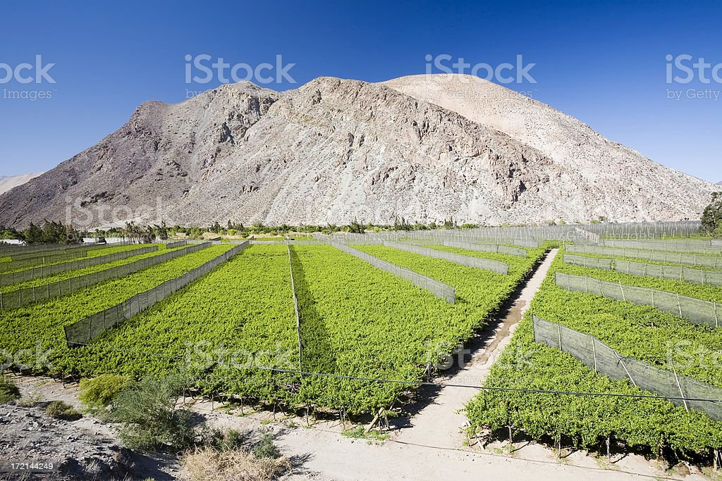 Vineyard Landscape, Chile royalty-free stock photo