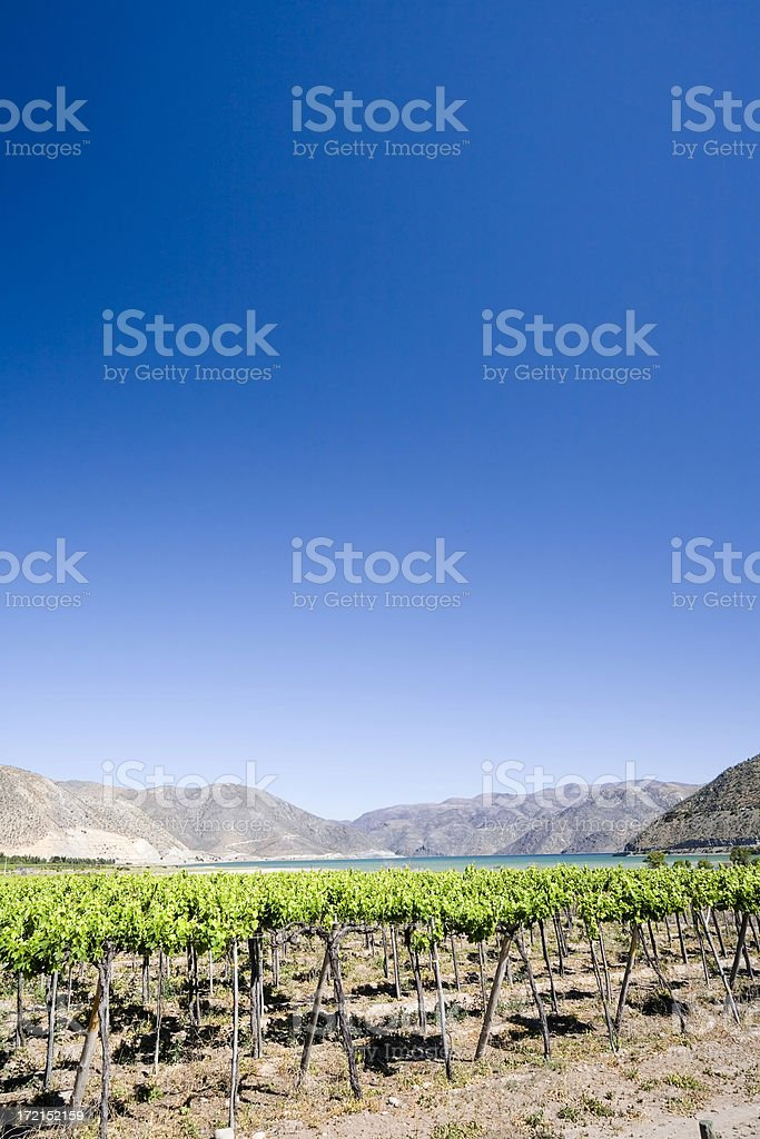 Vineyard Landscape, Chile stock photo