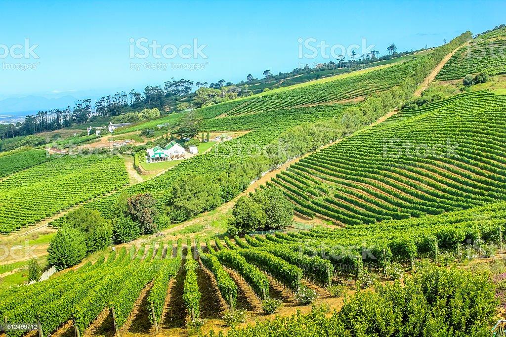 Vineyard landscape in Constantia stock photo