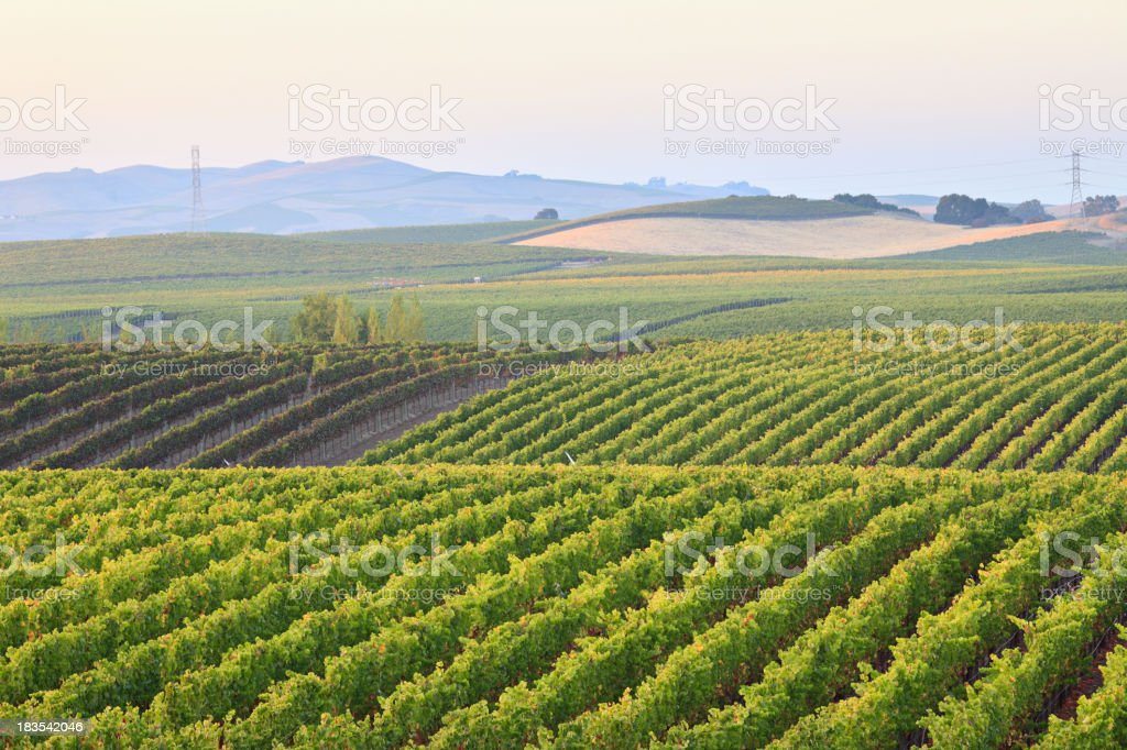 Vineyard landscape on a cloudy day royalty-free stock photo