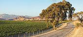 Vineyard Landscape - Summer