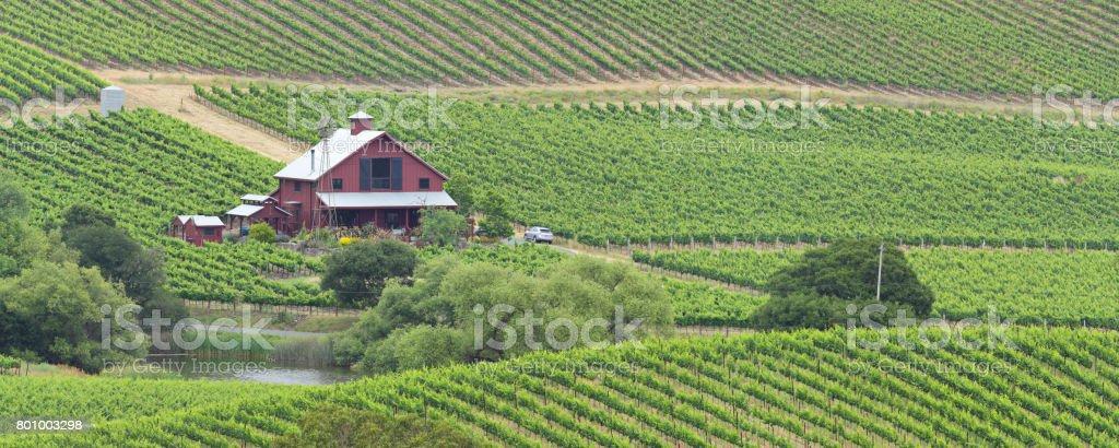 Vineyard Landscape - Summer stock photo