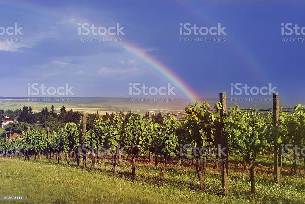 vineyard  landscape with rainbow on cloudy sky, natural background stock photo