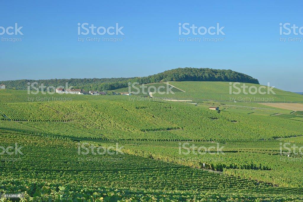 Vineyard Landscape,Champagne region,France stock photo