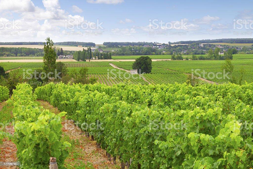 Vineyard Loire Valley France stock photo